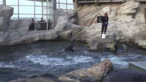aquarium boulogne sur mer tarif nausicaa boulogne sur mer