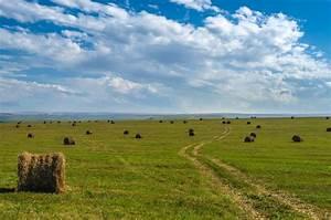 green grass the field plain the distance seno.soloma les ...  Plain