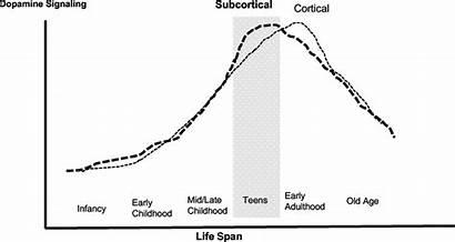 Subcortical Cortical Dopamine Span Modulation Gradients Schematic