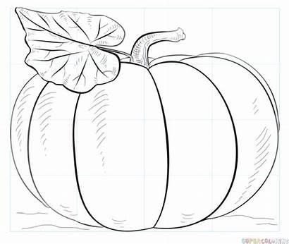 Draw Drawing Pumpkin Step Pumkin Paper Grid