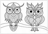 Coloring Owls Simple Branch Patterns Adults Adult Calm Pretty Animals Nature Resting sketch template