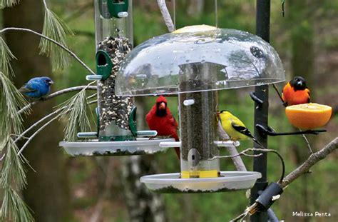our blog ziggy s tree wildlife rehabilitation center