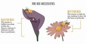 Increasing Your Garden U2019s Bee Population