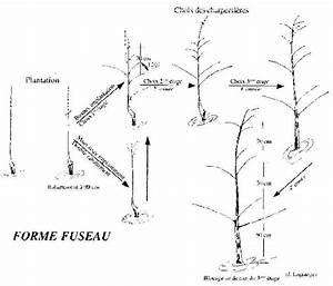 Comment Tailler Un Pommier : taille des poiriers cordon pommier mioulane map with ~ Dode.kayakingforconservation.com Idées de Décoration