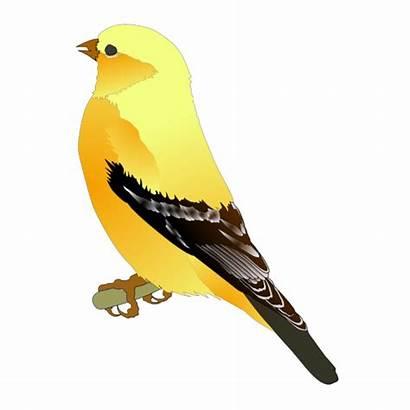 Finch Svg Clip Burung Gambar Icon Paling