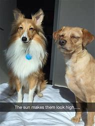 Funny Animals in the Sun