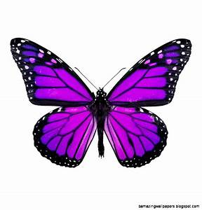 Purple Butterfly Images | Amazing Wallpapers
