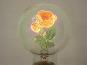 12 best Aerolux Light Bulbs images on Pinterest