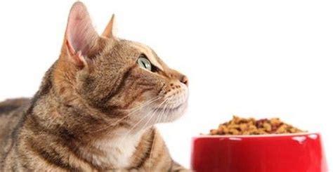 gatti alimentazione gatti 10 alimenti da evitare o limitare greenme