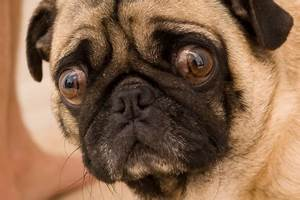 5 Herbs to Calm Your Stressed-Out Dog | My Blog