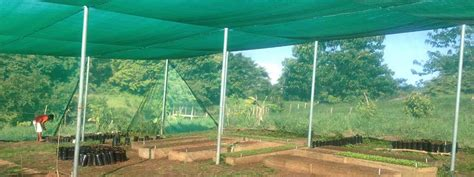 shade structure  growing vegetables
