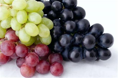 cours cap cuisine comment monder des raisins technique de cuisine