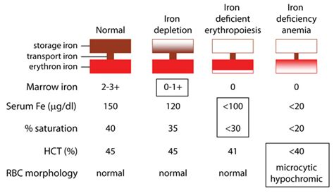 Treat And Prevent Iron Deficiency Anemia