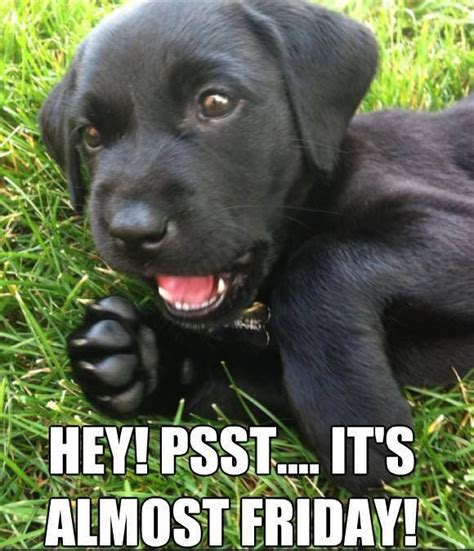 Almost Friday Meme - hey psst it s almost friday pictures photos and images for facebook tumblr pinterest