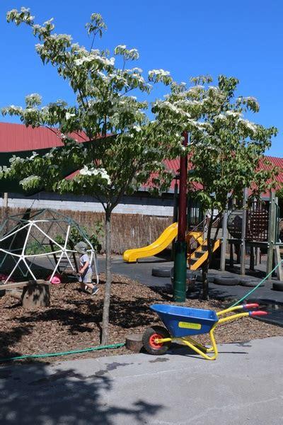 phoenix preschool ashburton preschool inc home 336