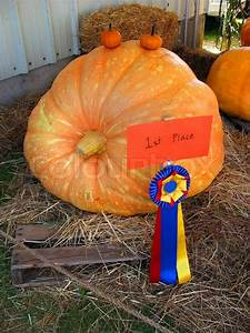 A prize winning pumpkin on display at an agricultural fair ...