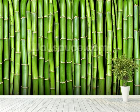 bamboo wallpaper wall mural wallsauce uk