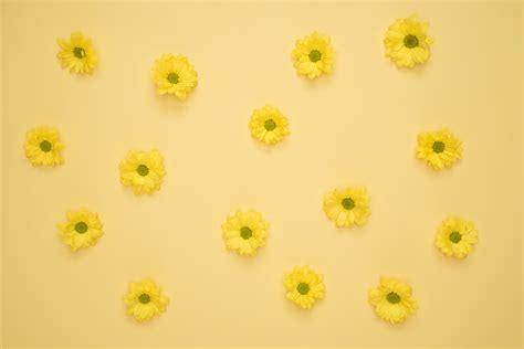 populer  gambar bunga aesthetic galeri bunga hd