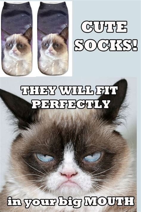 Best Angry Cat Meme - 17 best images about grumpy cat on pinterest memes humor grumpy cat quotes and grumpy cat images