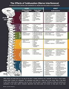 Nerves Cervical Spine Chart Effects Of Subluxation Subluxation Chiropractic Care