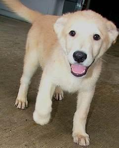 Dog Adoption Dogs For Adoption