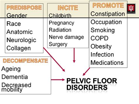 high tone pelvic floor dysfunction physical therapy 10 settles pelvic floor disorders
