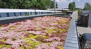 Extensive Dachbegrünung Aufbau : dachbegr nung mit sedum zinco ~ Whattoseeinmadrid.com Haus und Dekorationen