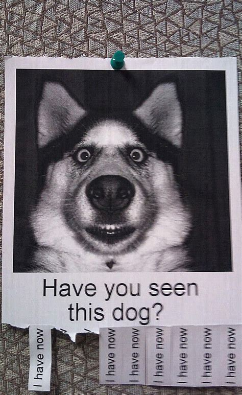 attention grabbing lost dog posters