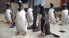 See New Mr. Popper's Penguins Photos - FilmoFilia