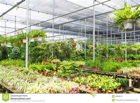 best plant nurseries plant nursery royalty free stock images image 35884679