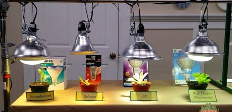 can you use a flood light to grow plants grow lights for beginners start plants indoors the