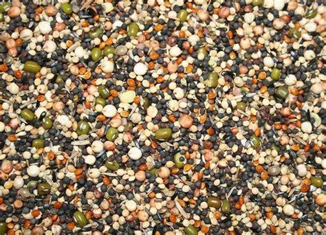 Prambanan Maw Seeds 2kg countrywide germination seed soak seed garden feathers