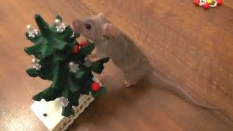 trained mice decorate a tiny christmas tree