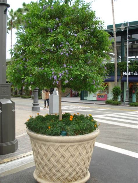 arbres fruitiers en pot l arbre en pot 28 images grand arbre paperplane chene arbre artificiel 350 cm de haut 2 790