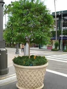 Pot Pour Arbre : arbre en pot pour terrasse quel arbre fruitier en pot ~ Dallasstarsshop.com Idées de Décoration