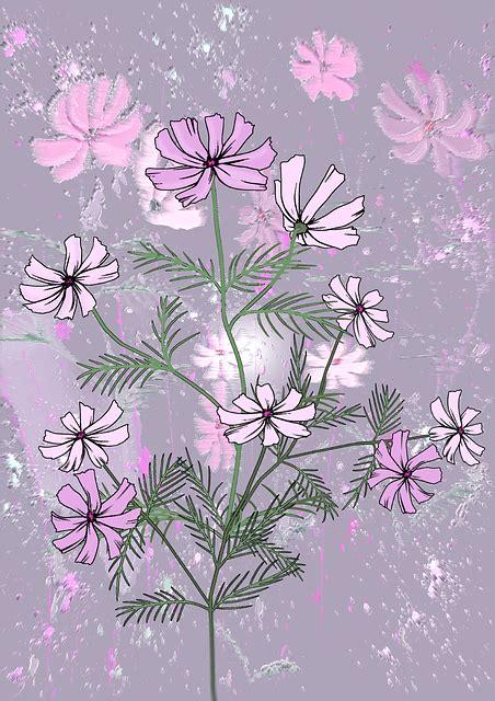 bunga latar belakang wallpaper gambar gratis  pixabay