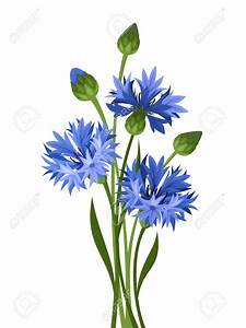 Bouquet Of Blue Cornflowers Vector Illustration Royalty ...
