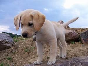 Ich Suche Einen Großen Hund : ich w nsche mir einen hund ~ Jslefanu.com Haus und Dekorationen