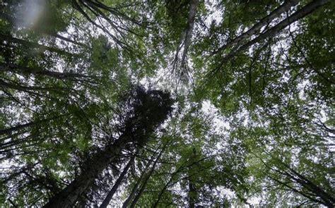 karnataka forest department    trees puts