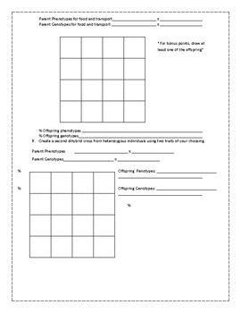 dihybrid cross punnett practice worksheet by science with mingels