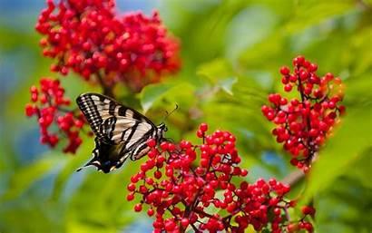 Butterfly Colorful Desktop Wallpapers 4k