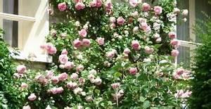 Support Pour Rosier Grimpant : lys ou lis lilium fleur plantation culture entretien ~ Premium-room.com Idées de Décoration