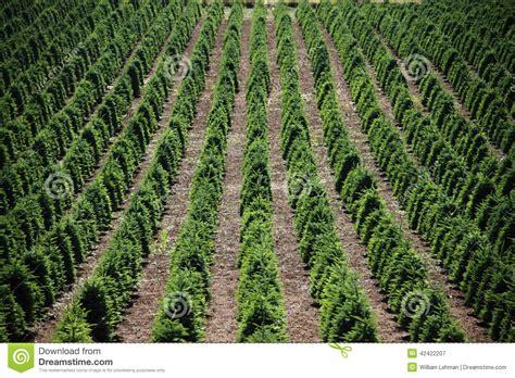 christmas tree farm stock image image of irrigate