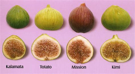 types of figs simply living it s fig season