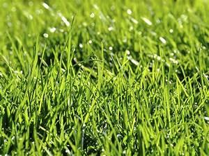 Engrais Gazon Naturel : gazon tape 1 2 printemps t 7 3 2 ~ Premium-room.com Idées de Décoration