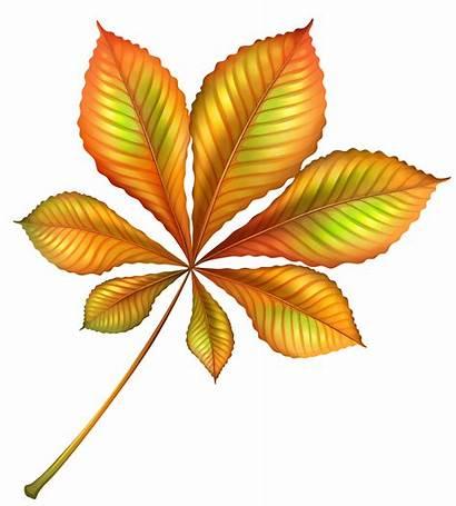 Clipart Autumn Leaf Orange Clip Fall Thanksgiving