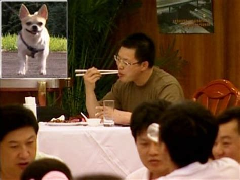 dog  cat meat   menu  china abc news