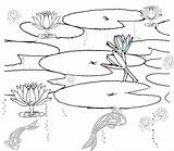 Pond Coloring Pages Realistic Habitat Printable Drawing Clipart Fish Scene Ponds Habitats Colouring Sketch Duck Plants Lily Clip Sketchite Template sketch template