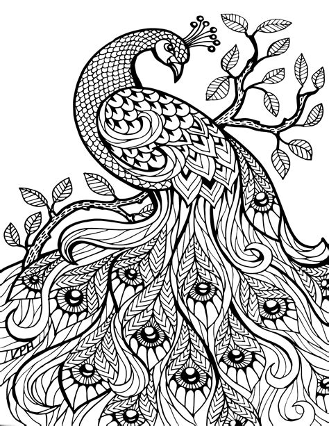 Adult Coloring Pages Peacock Coloringstar