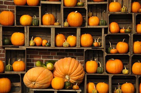 Autumn Pumpkin Wallpaper by Free Desktop Pumpkin Wallpapers Pixelstalk Net